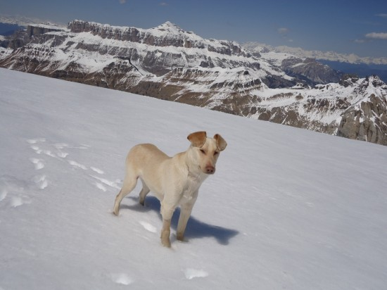 Cody surveys the snow-covered mountain scene